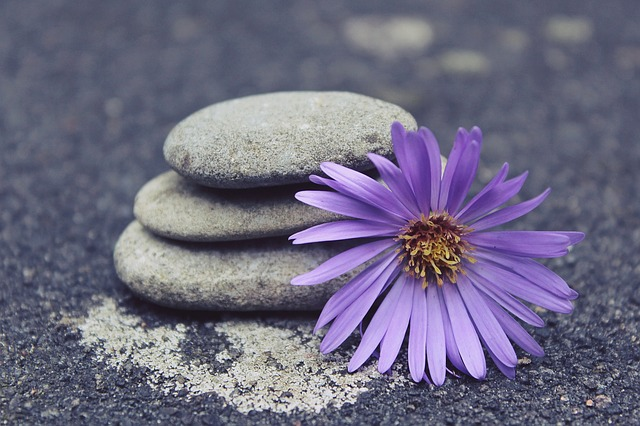 purple flower with rocks
